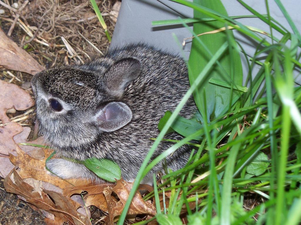 Baby Rabbit Kit