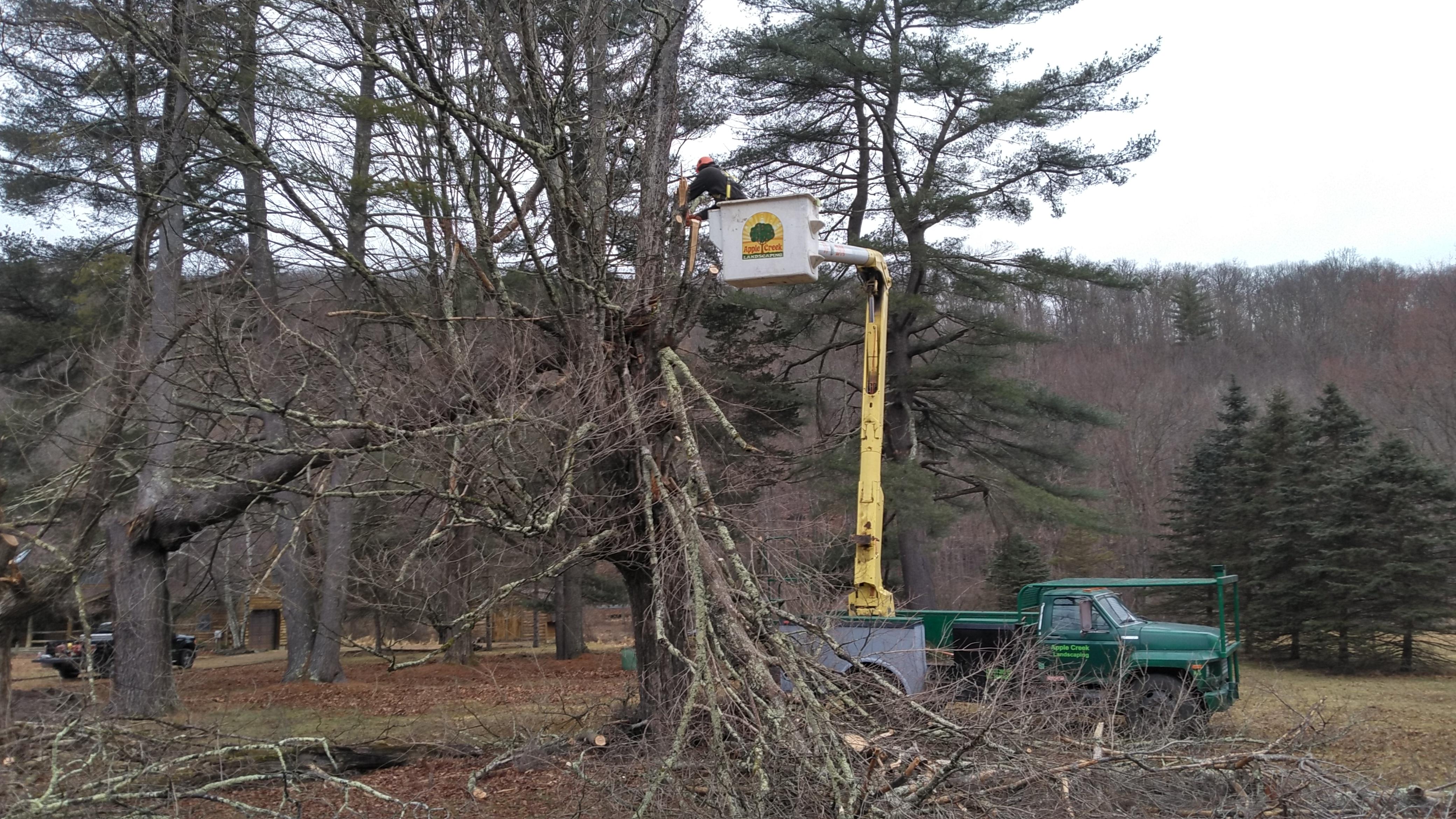 Apple Creek tree service in progress