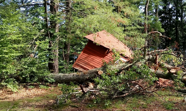 Tree down on shed.