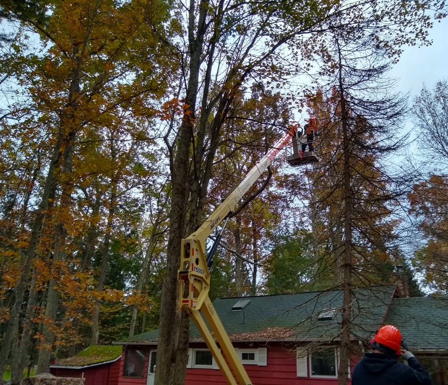 Tree Removal from a Lift by Apple Creek Landscaping