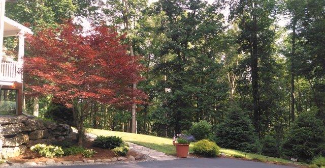 Mature Landscaping Refresh